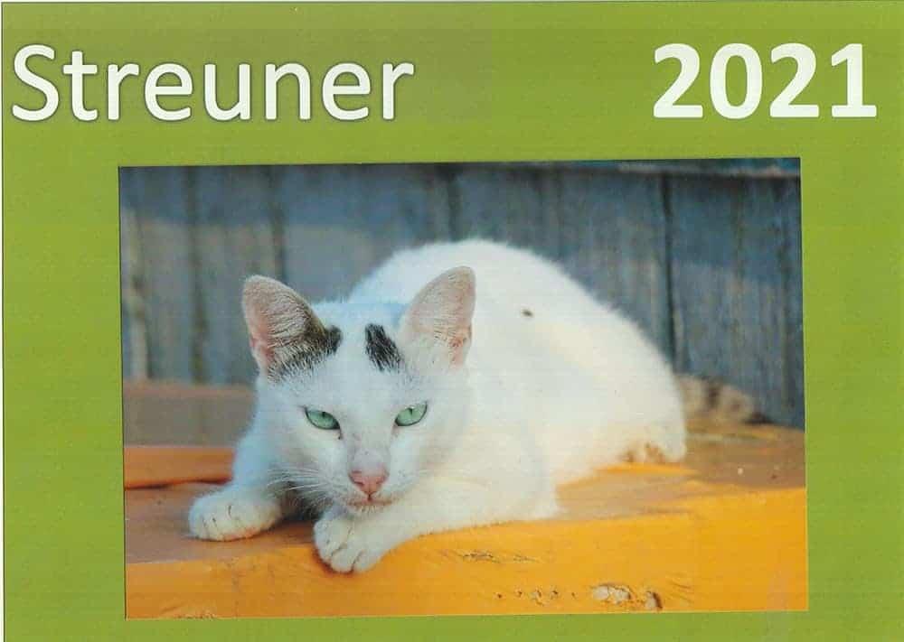 Katze 2021