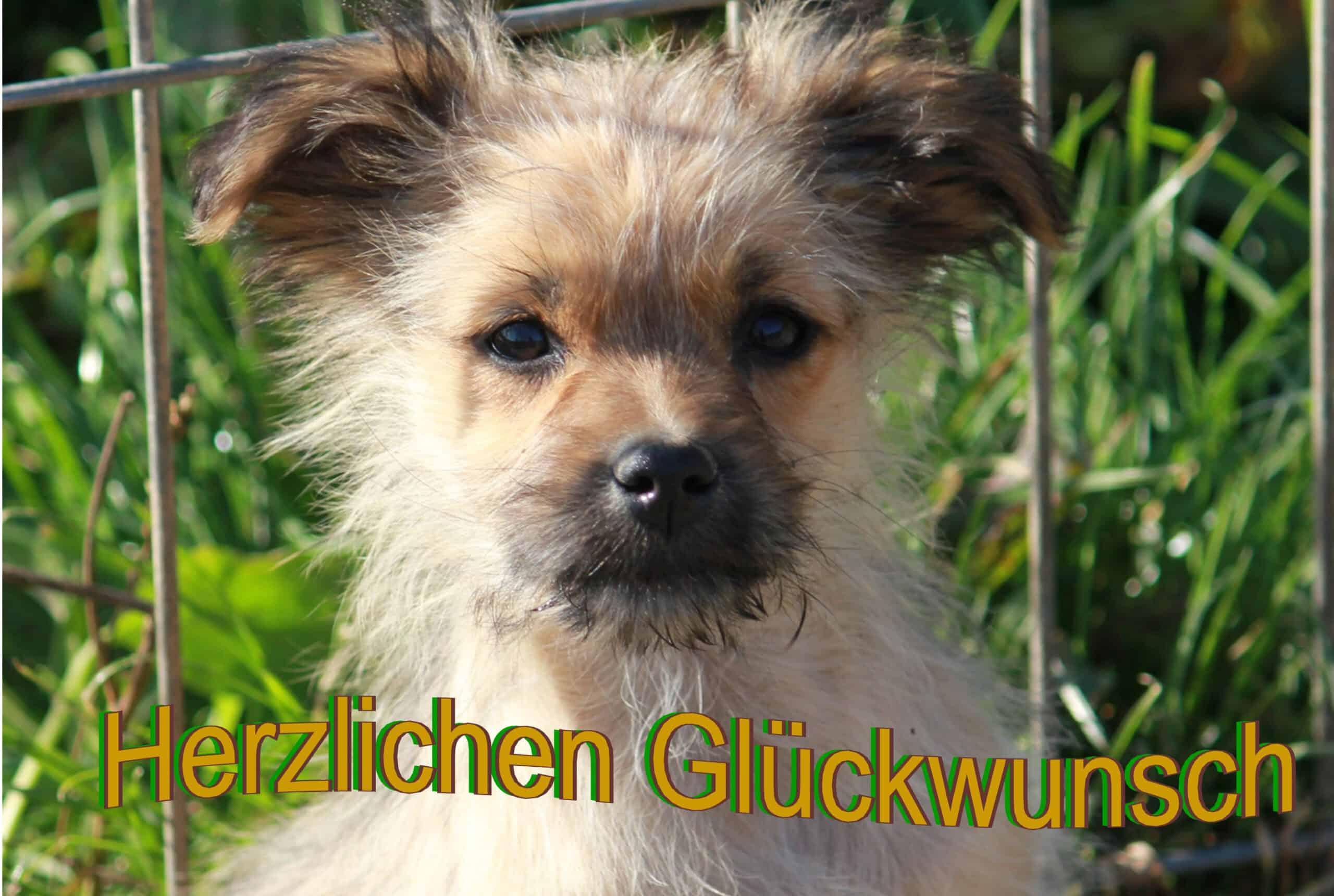 29 Herzlichen Glückwunsch Birgit Heinze