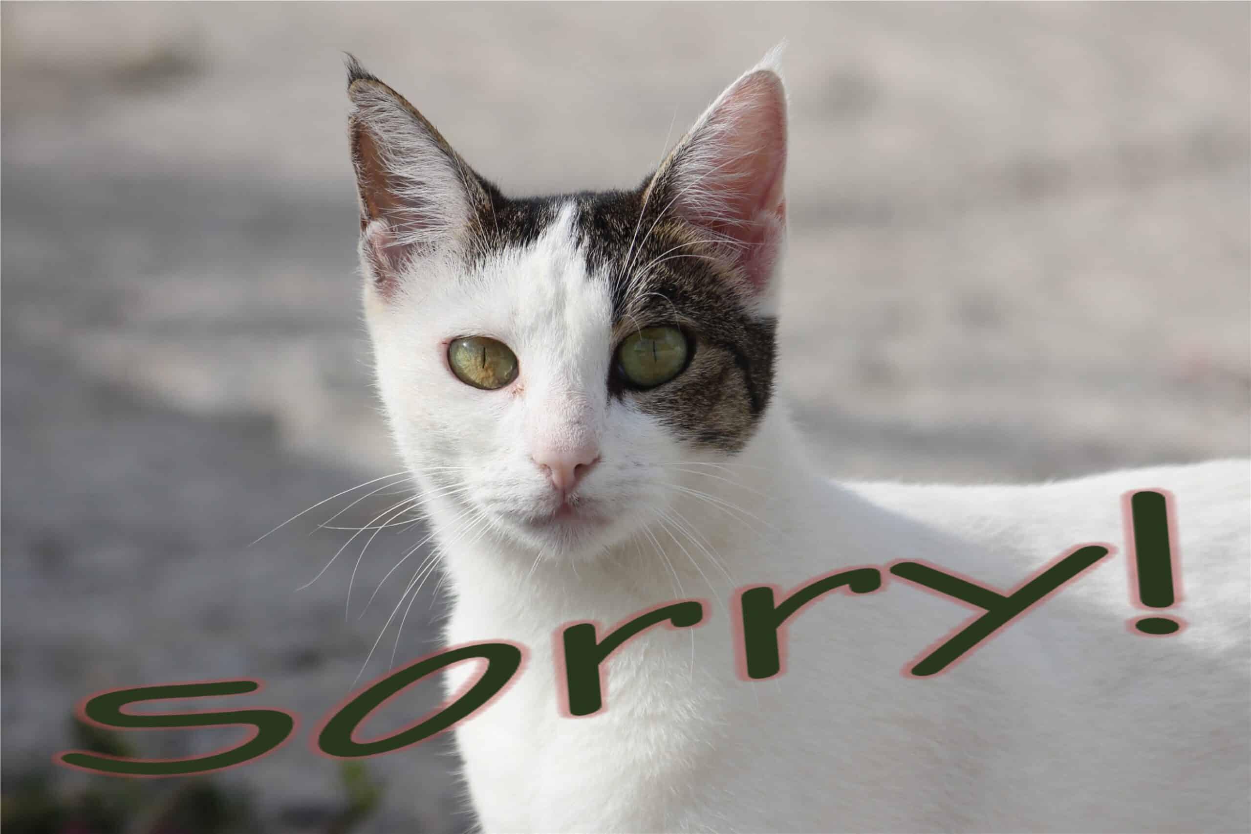 91 sorry Katze