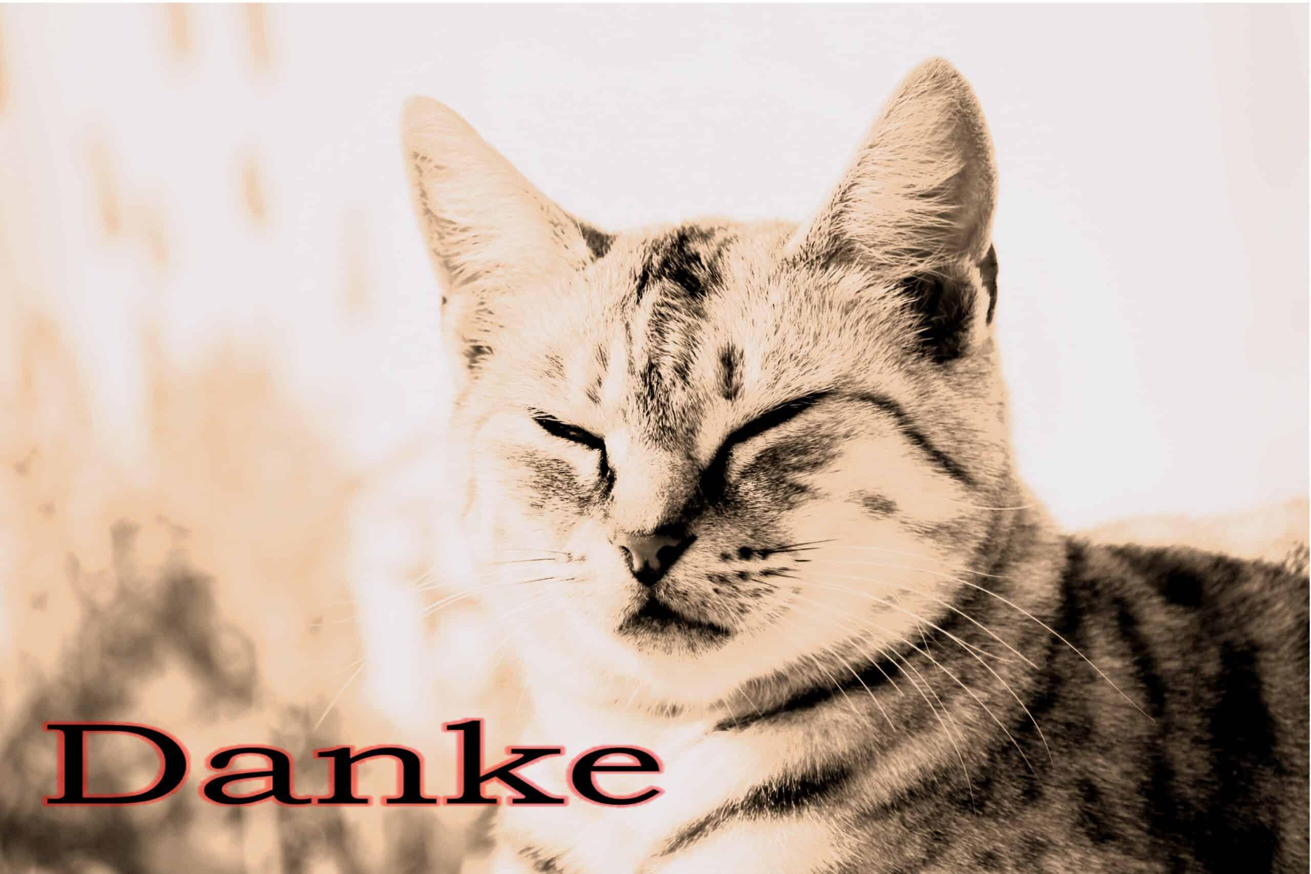 94 Katze Danke 5