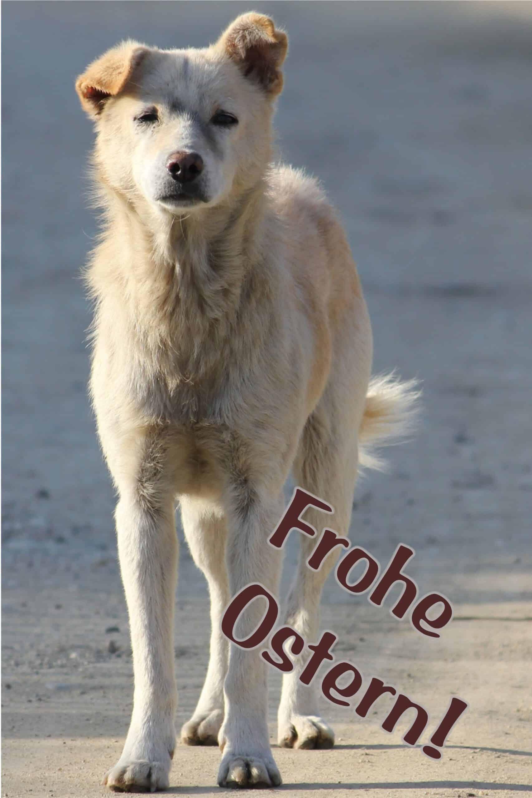 60 weißer Hund FOTO