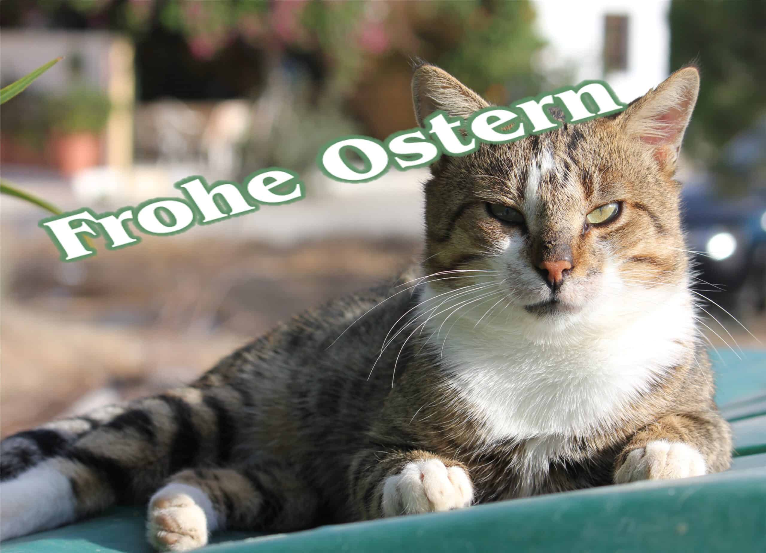 86 Frohe Ostern Katze