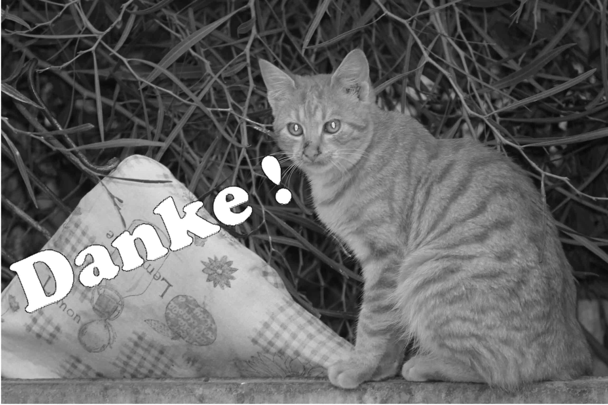 92 Danke Katze3